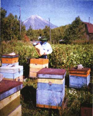 Пчеловодство на Камчатке