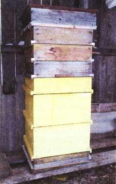 Мой опыт содержания пчел