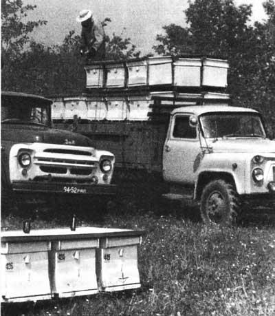 Перевозка пчелиных семей