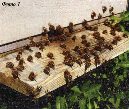 Пчелы и физика