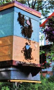 ценное в пчеловодстве