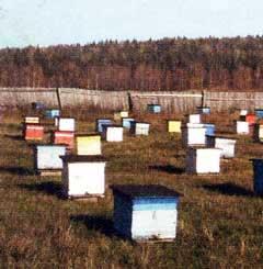 Зимнее поколение пчел
