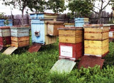 пчеловод В.П.Цебро