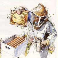 Профессия пчеловод