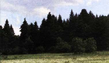 дубовые смешанные леса