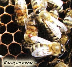 пчелы покидают гнездо