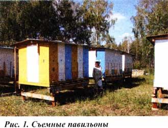 павильонное содержания пчел
