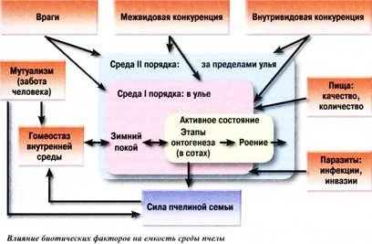 большинство биотических факторов