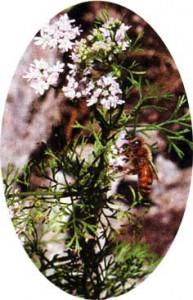 Привлечение пчел