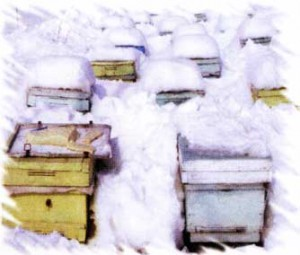 зимой в Армении