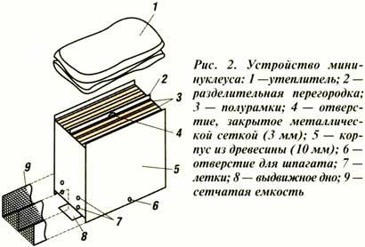 мини-нуклеуса