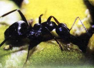 Защита пчел от муравьев