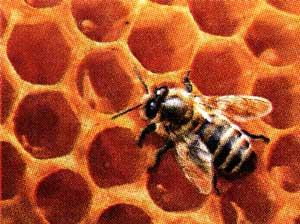 Растопить пчелиный воск