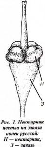нектарник
