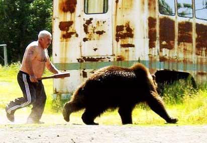 медведь вернулся