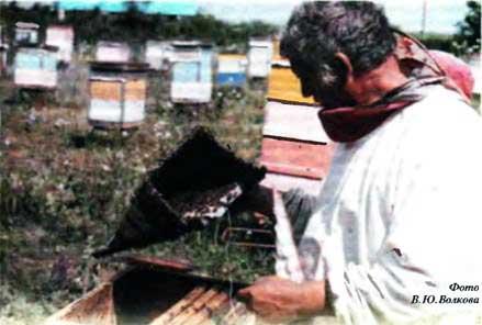 о роении пчел