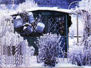 Месяц январь - зимы государь