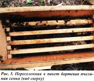пчел переселяют в улей