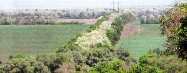 полезащитных лесных полос