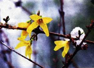Что такое март? Не зима, не весна...