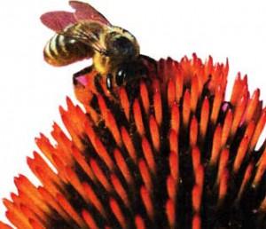 Пчелы жалят