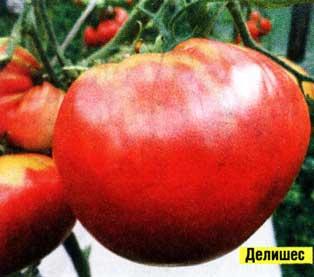 выращиваю сорта