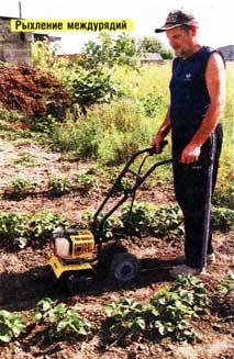 Агротехника земклуники