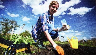 высаживать ягодные кусты