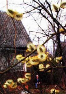 Апрель открывает весне дверь