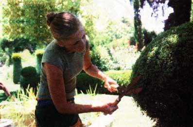 об обрезке декоративных растений