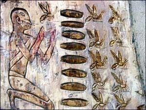 древнего мира пчелы
