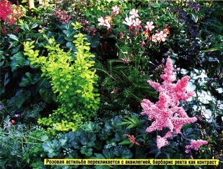 низкорослыми цветами