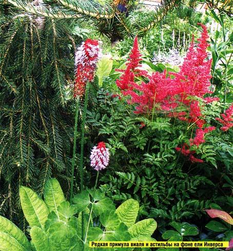 подобрать растения