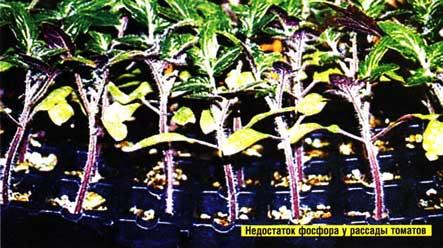томатам фосфор