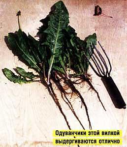 одуванчиков