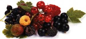 ягоды надо собирать