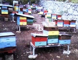 многокорпусного содержания пчел