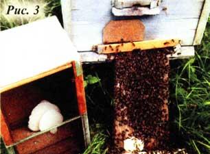 пчелы роя