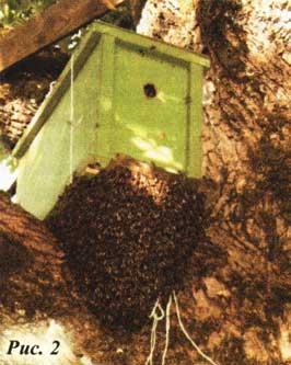 пчелами ловушку