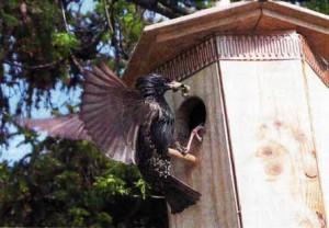 птичьих домиках