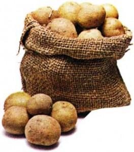 выращенный картофель