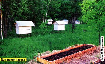 мы заводим пчел
