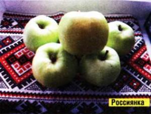 яблоками наполнена
