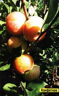 Яблоневым садом