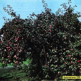 яблоки и писатели