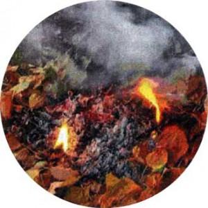 Не сжигайте листву