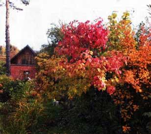 Встречайте золотую осень