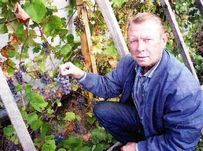 В Красноярске виноград