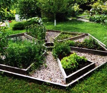 выращиваем пряные травы