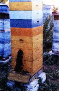 пчелы выкучились из улья
